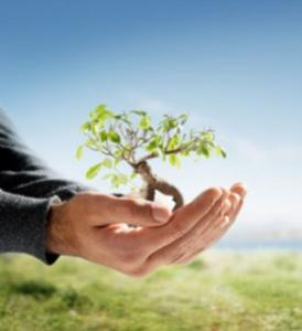 Term Life Insurance v Whole Life Insurance