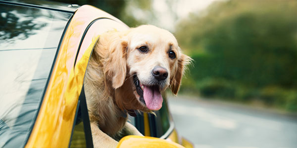 how-to-make-a-safe-car-journey-with-your-dog